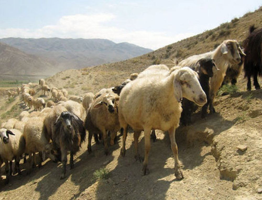 Was trading by nomads crucial to the rise of cities?